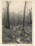 Crash Site Bois de Locus(1)